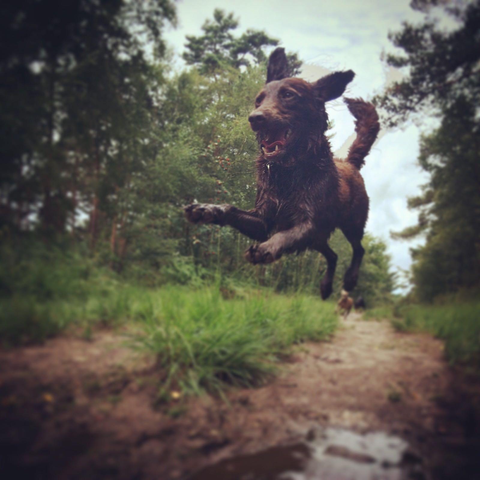 dog walking tunbridge wells